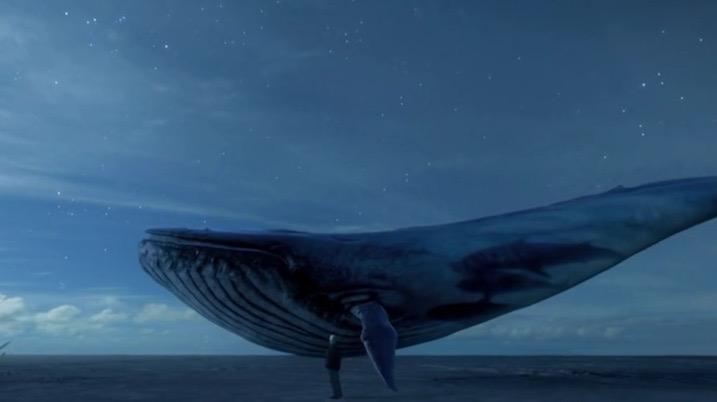 Balena Albastra abordare nepotrivita !